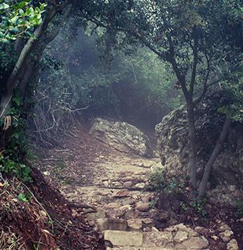 Broken Path Through Forest