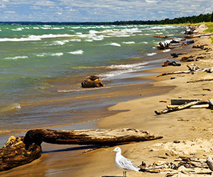 Seeing Driftwood – Recognizing Signs of Success